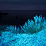 macOS Big Sur Night Grasses
