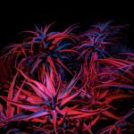 macOS Big Sur Night Succulents