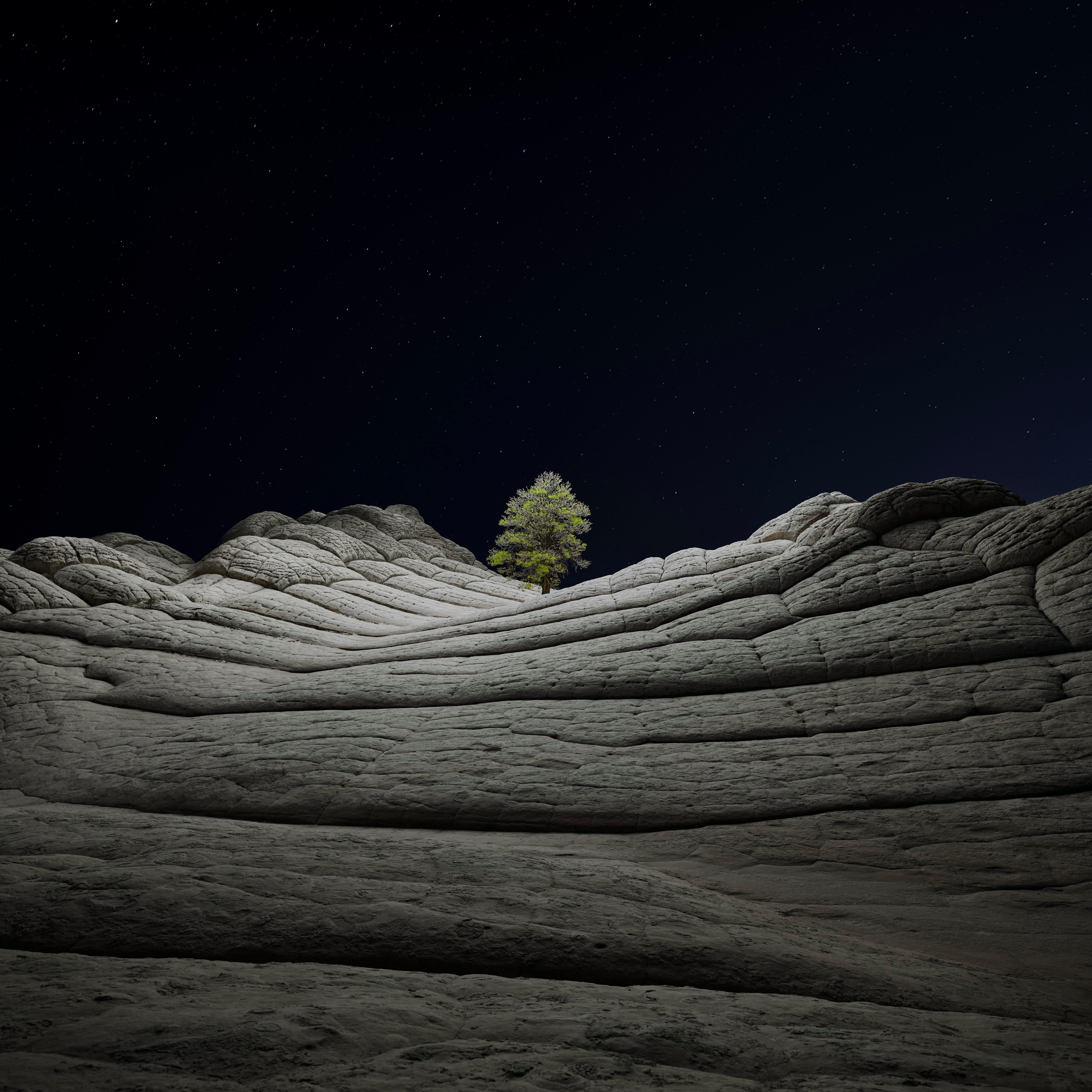 macOS Big Sur Tree 2 dragged